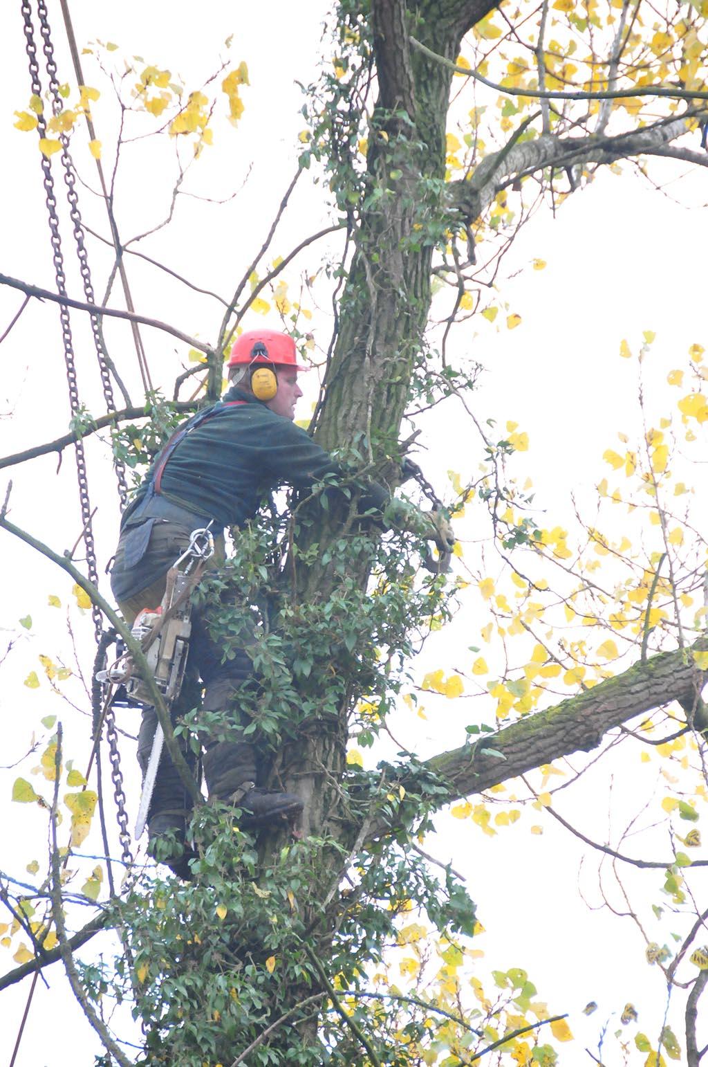 Keramische tegels bomen rooien oud zuilen for Hoeveel kost zwemvijver